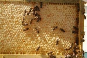 bees-on-honeycomb