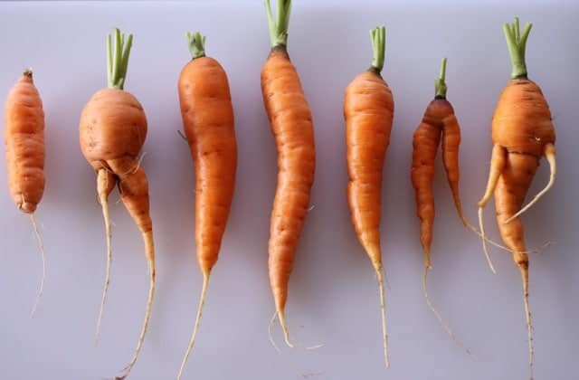 homegrown carrots