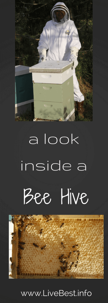 A look inside an bee hive. how honey is made. wwwLiveBest.info
