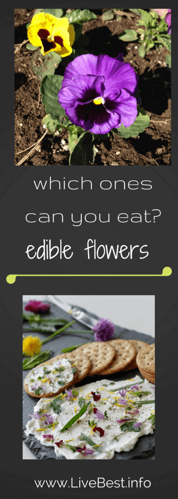 which flowers can you eat? Edible flowers on a delicious herb and flower cheese dip. www.LiveBest.info